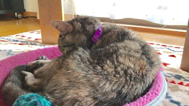 高齢になると猫は1日のほとんどを寝て過ごす