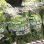 アク抜きが必要な野菜とアク抜きが要らない野菜の違い
