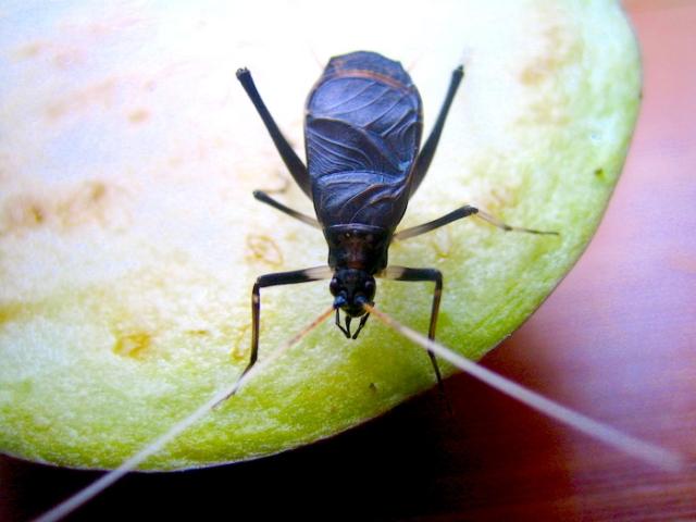 鈴虫の鳴き声は携帯で聞こえない