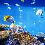 【熱帯魚の水槽】水槽の温度が上がらない時の5つの解決方法