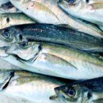 【数の常識】魚を数える単位が匹・本・枚・杯・尾の違いと成り立ち
